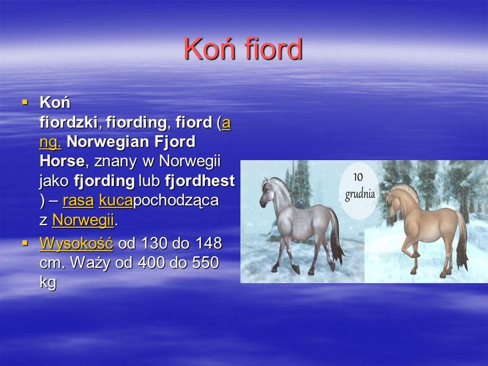 Koń fiord  Koń fiordzki, fiording, fiord (a ng.