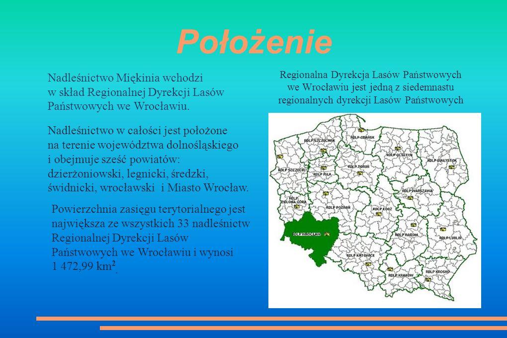 Regionalna Dyrekcja Lasów Państwowych we Wrocławiu jest jedną z siedemnastu regionalnych dyrekcji Lasów Państwowych Położenie Nadleśnictwo Miękinia wchodzi w skład Regionalnej Dyrekcji Lasów Państwowych we Wrocławiu.