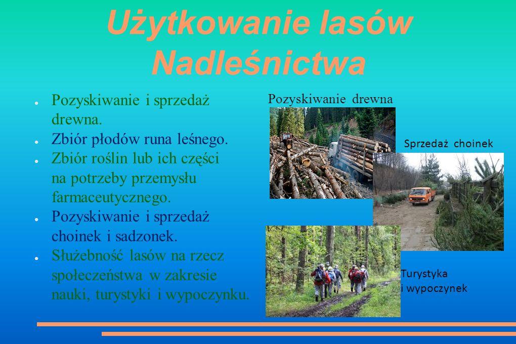 Użytkowanie lasów Nadleśnictwa ● Pozyskiwanie i sprzedaż drewna.