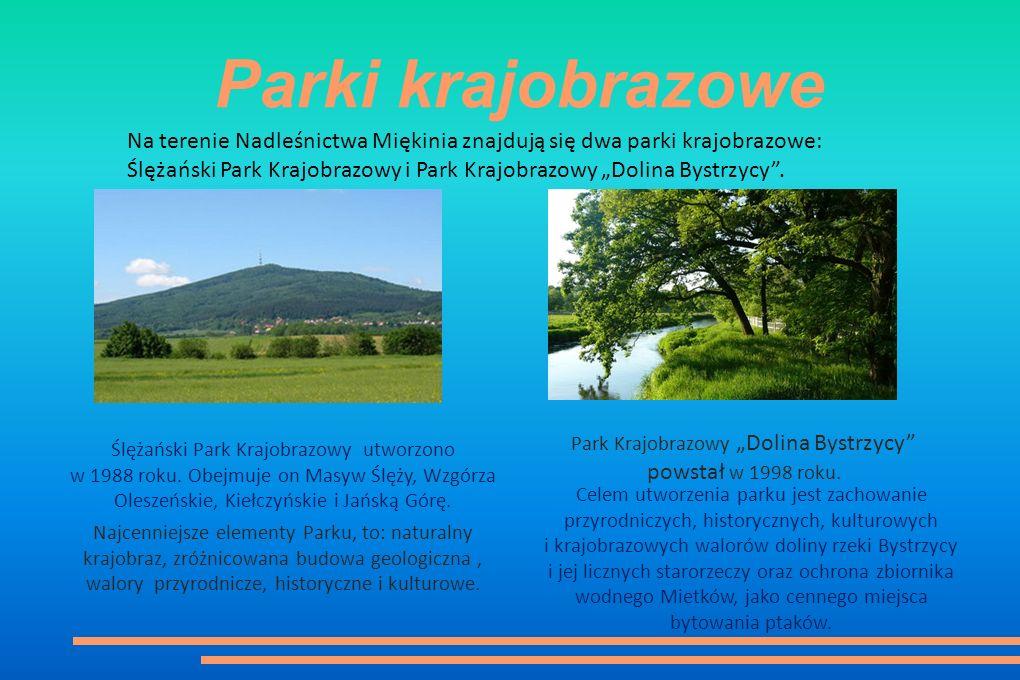 """Parki krajobrazowe Na terenie Nadleśnictwa Miękinia znajdują się dwa parki krajobrazowe: Ślężański Park Krajobrazowy i Park Krajobrazowy """"Dolina Bystrzycy ."""