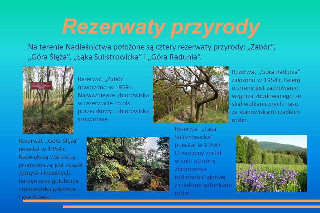 """Rezerwaty przyrody Na terenie Nadleśnictwa położone są cztery rezerwaty przyrody: """"Zabór , """"Góra Ślęża , """"Łąka Sulistrowicka i """"Góra Radunia ."""