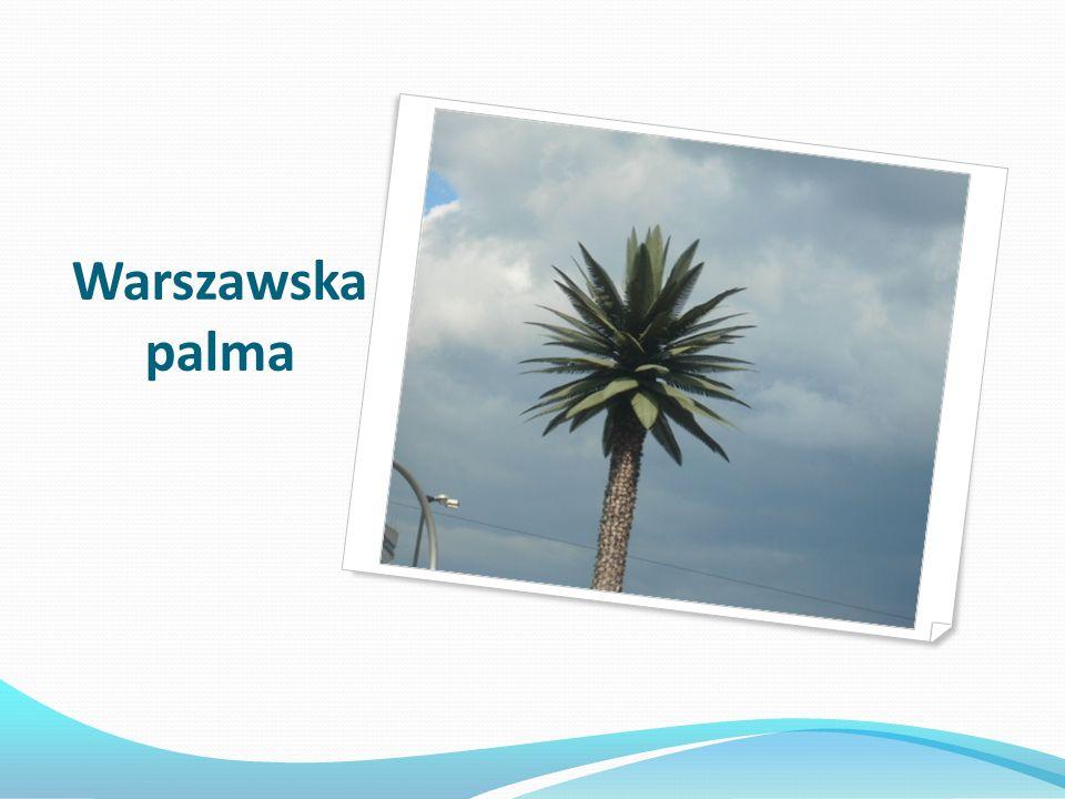 Warszawska palma