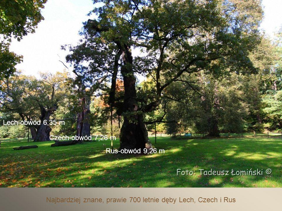 W Parku krajobrazowym w stylu angielskim znajduje się unikatowe skupisko dębów oraz bogata roślinność.