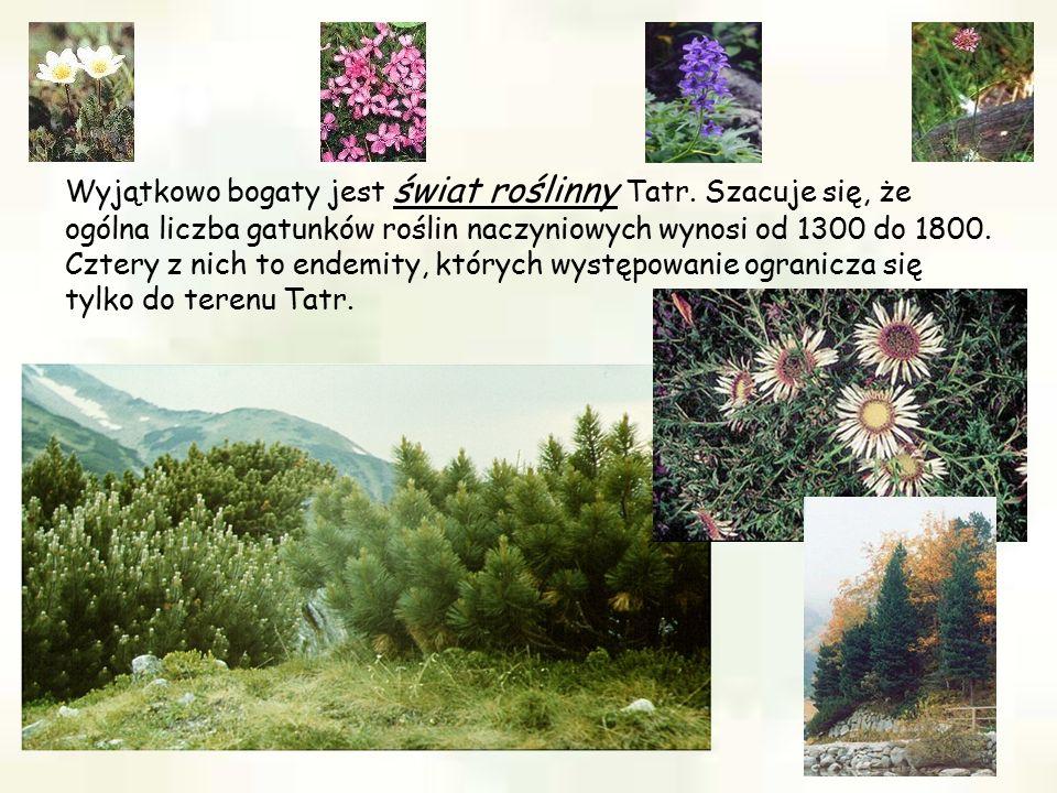 Wyjątkowo bogaty jest świat roślinny Tatr. Szacuje się, że ogólna liczba gatunków roślin naczyniowych wynosi od 1300 do 1800. Cztery z nich to endemit
