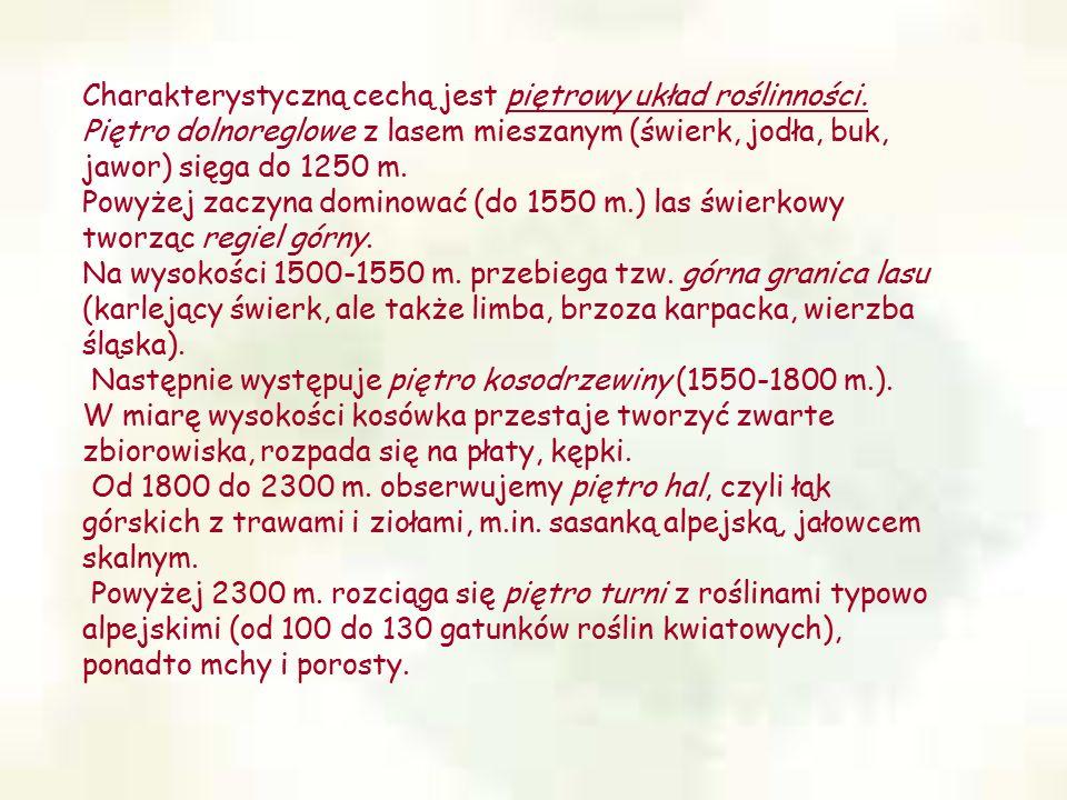 Charakterystyczną cechą jest piętrowy układ roślinności. Piętro dolnoreglowe z lasem mieszanym (świerk, jodła, buk, jawor) sięga do 1250 m. Powyżej za