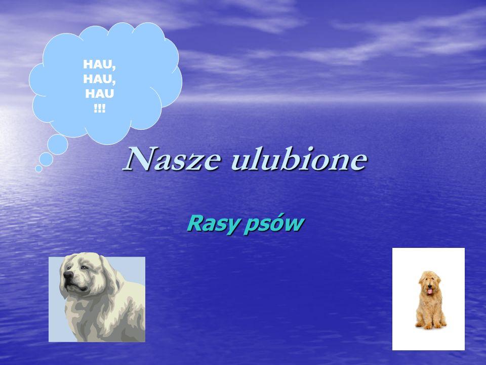 Nasze ulubione Rasy psów HAU, HAU !!!