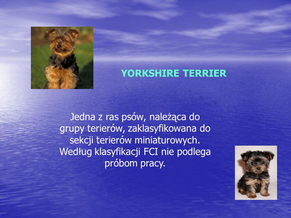 YORKSHIRE TERRIER Jedna z ras psów, należąca do grupy terierów, zaklasyfikowana do sekcji terierów miniaturowych.