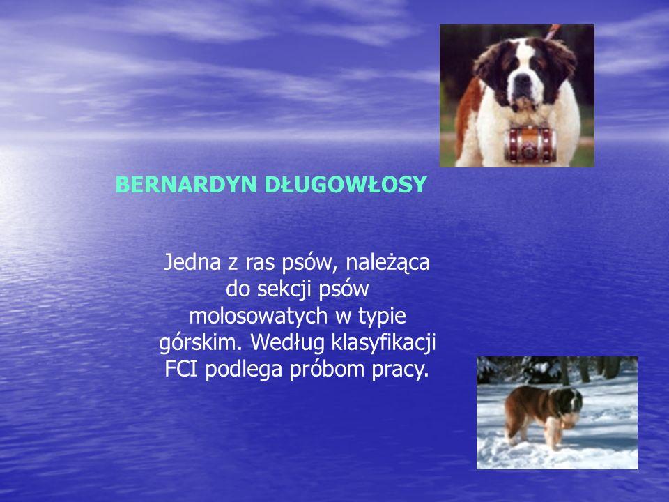 Jest jedną z ras psów, należącą do grupy psów aportujących, płochaczy i psów wodnych, zaklasyfikowana do sekcji psów aportujących.
