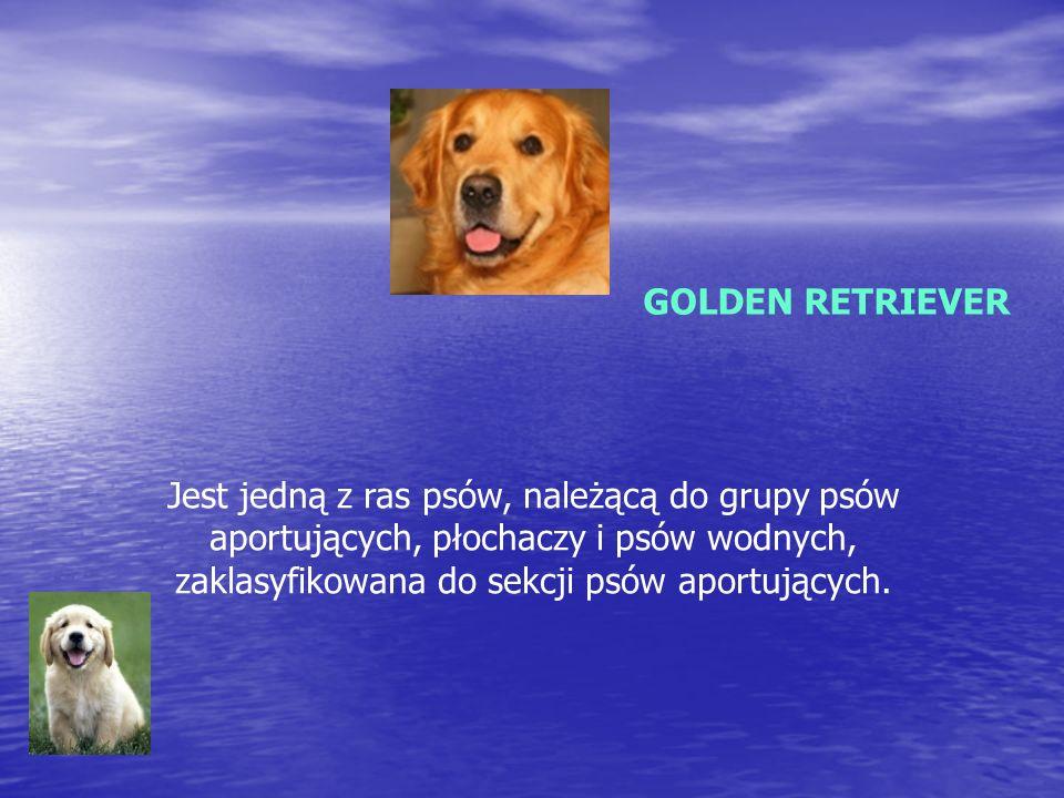 NOWOFUNDLAND Jedna z ras psów, pochodząca z Nowej Fundlandii.