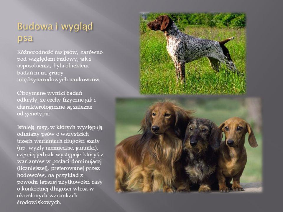 Budowa i wygl ą d psa Różnorodność ras psów, zarówno pod względem budowy, jak i usposobienia, była obiektem badań m.in. grupy międzynarodowych naukowc