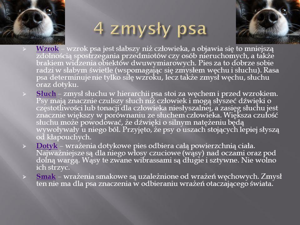  Wzrok – wzrok psa jest słabszy niż człowieka, a objawia się to mniejszą zdolnością spostrzegania przedmiotów czy osób nieruchomych, a także brakiem