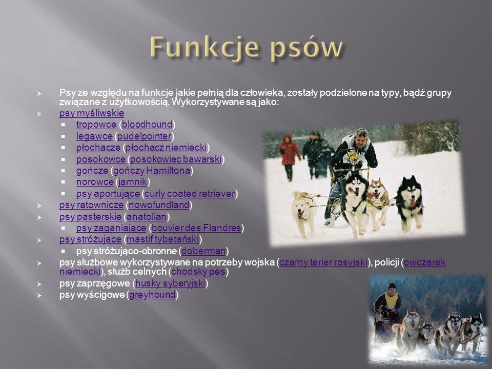  Psy ze względu na funkcje jakie pełnią dla człowieka, zostały podzielone na typy, bądź grupy związane z użytkowością. Wykorzystywane są jako:  psy