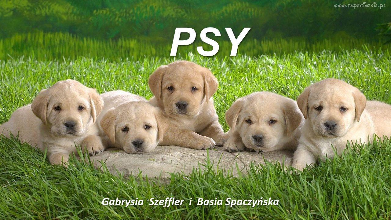PSY PSY Gabrysia Szeffler i Basia Spaczyńska