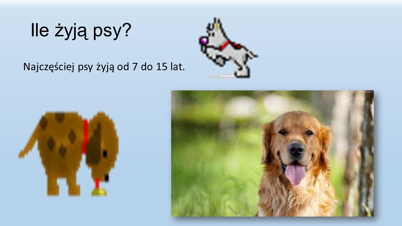 Ile żyją psy? Najczęściej psy żyją od 7 do 15 lat.