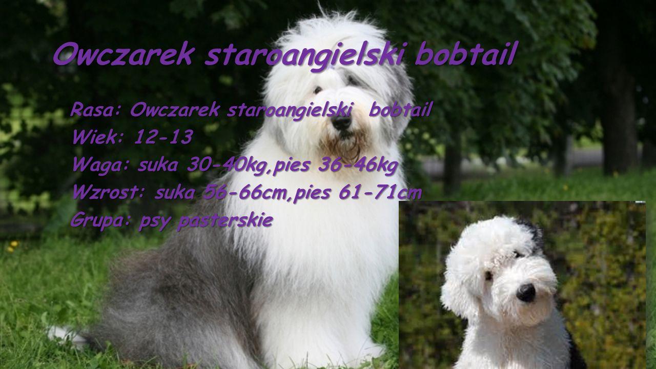 Owczarek staroangielski bobtail Rasa: Owczarek staroangielski bobtail Wiek: 12-13 Waga: suka 30-40kg,pies 36-46kg Wzrost: suka 56-66cm,pies 61-71cm Gr