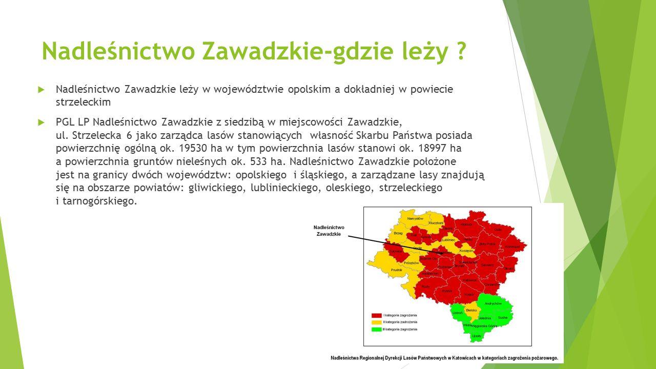 Nadleśnictwo Zawadzkie-gdzie leży ?  Nadleśnictwo Zawadzkie leży w województwie opolskim a dokładniej w powiecie strzeleckim  PGL LP Nadleśnictwo Za