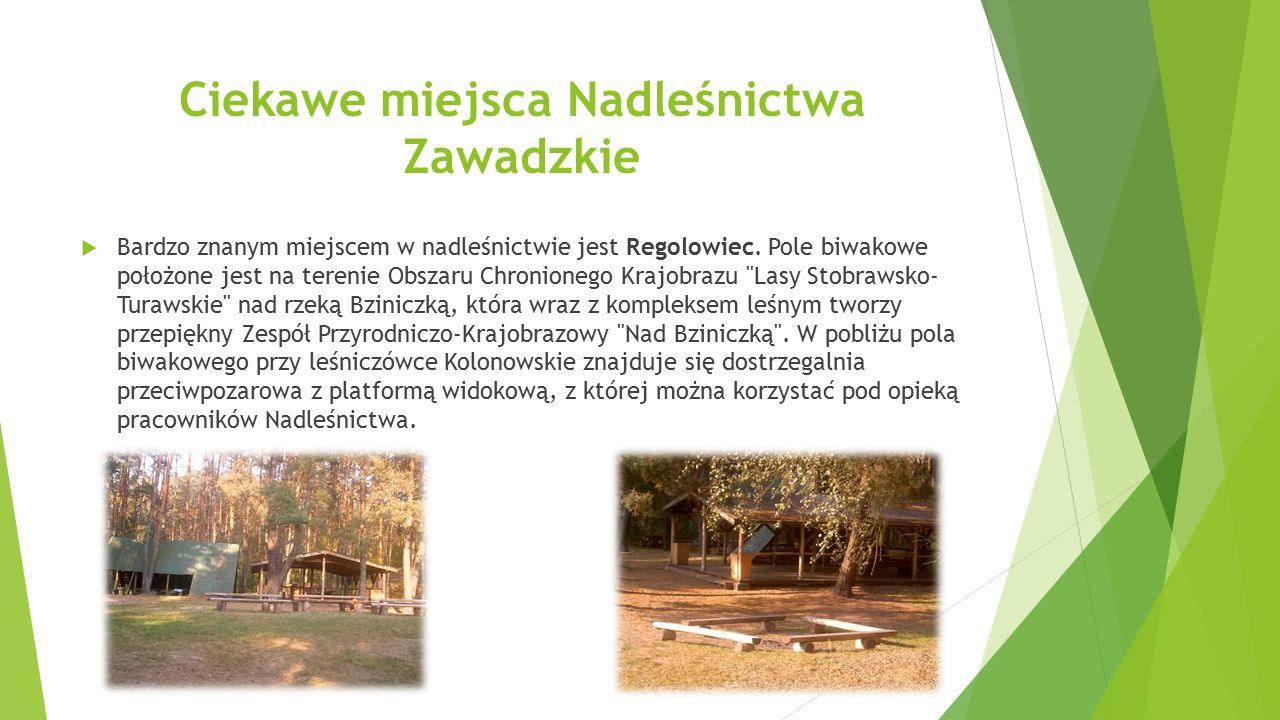 Ciekawe miejsca Nadleśnictwa Zawadzkie  Bardzo znanym miejscem w nadleśnictwie jest Regolowiec. Pole biwakowe położone jest na terenie Obszaru Chroni