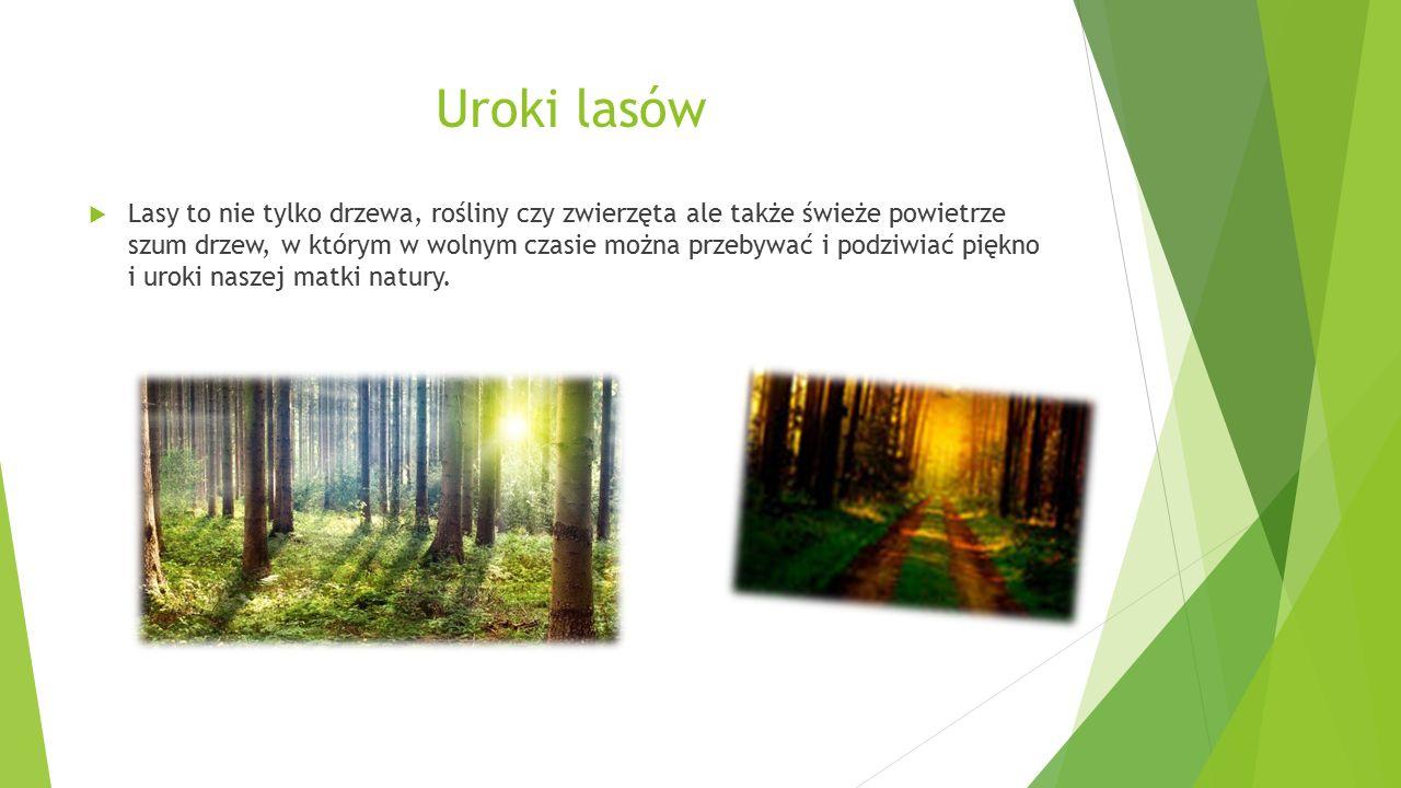 Uroki lasów  Lasy to nie tylko drzewa, rośliny czy zwierzęta ale także świeże powietrze szum drzew, w którym w wolnym czasie można przebywać i podziw