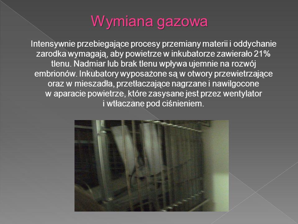 Wymiana gazowa Intensywnie przebiegające procesy przemiany materii i oddychanie zarodka wymagają, aby powietrze w inkubatorze zawierało 21% tlenu.