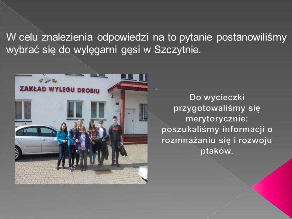 W celu znalezienia odpowiedzi na to pytanie postanowiliśmy wybrać się do wylęgarni gęsi w Szczytnie.