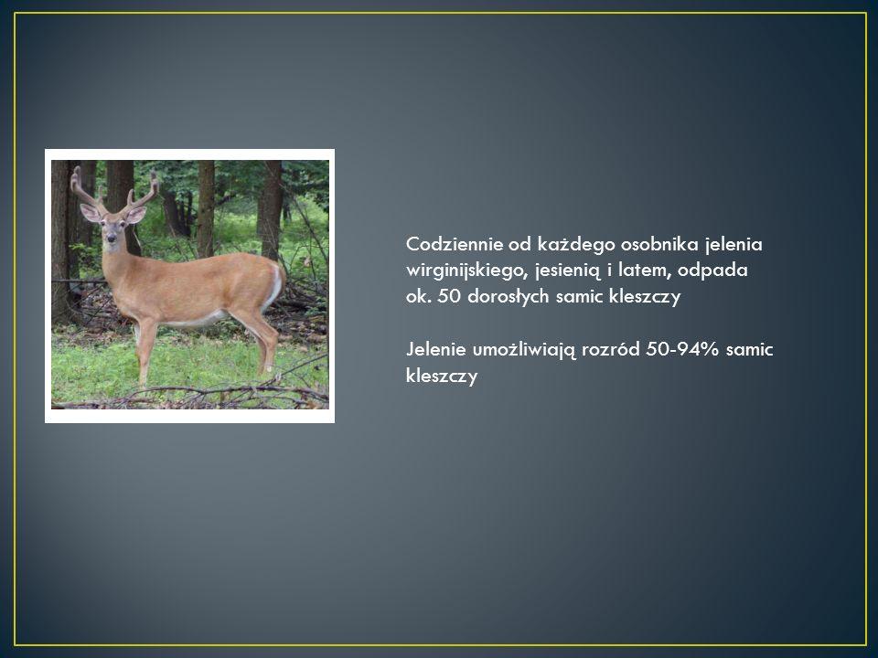 Codziennie od każdego osobnika jelenia wirginijskiego, jesienią i latem, odpada ok.