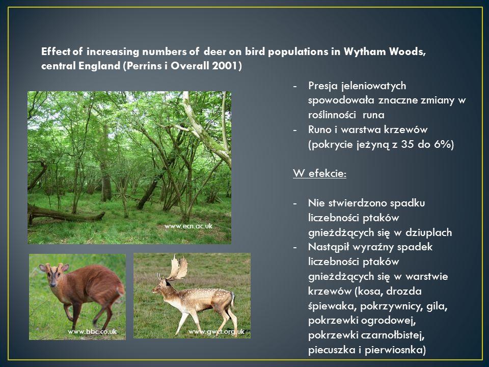 Effect of increasing numbers of deer on bird populations in Wytham Woods, central England (Perrins i Overall 2001) www.bbc.co.uk www.ecn.ac.uk www.gwct.org.uk -Presja jeleniowatych spowodowała znaczne zmiany w roślinności runa -Runo i warstwa krzewów (pokrycie jeżyną z 35 do 6%) W efekcie: -Nie stwierdzono spadku liczebności ptaków gnieżdżących się w dziuplach -Nastąpił wyraźny spadek liczebności ptaków gnieżdżących się w warstwie krzewów (kosa, drozda śpiewaka, pokrzywnicy, gila, pokrzewki ogrodowej, pokrzewki czarnołbistej, piecuszka i pierwiosnka)