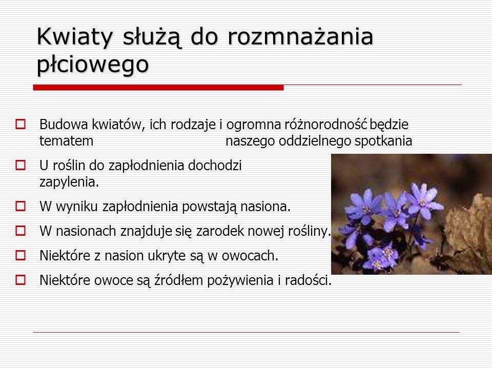 Kwiaty służą do rozmnażania płciowego  Budowa kwiatów, ich rodzaje i ogromna różnorodność będzie tematem naszego oddzielnego spotkania  U roślin do