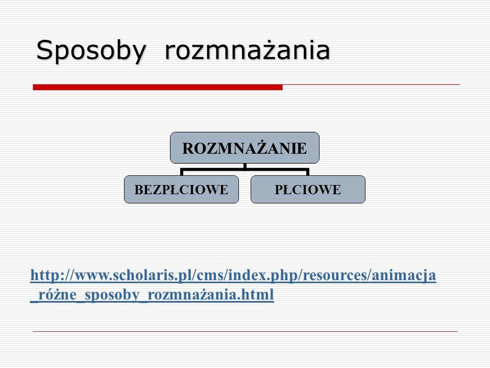 Sposoby rozmnażania ROZMNAŻANIE BEZPŁCIOWEPŁCIOWE http://www.scholaris.pl/cms/index.php/resources/animacja _różne_sposoby_rozmnażania.html