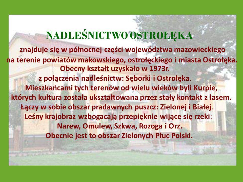 NADLE Ś NICTWO OSTROŁ Ę KA znajduje się w północnej części województwa mazowieckiego na terenie powiatów makowskiego, ostrołęckiego i miasta Ostrołęka.