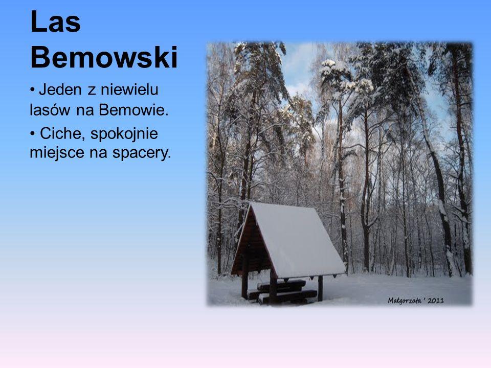 Las Bemowski Jeden z niewielu lasów na Bemowie. Ciche, spokojnie miejsce na spacery.