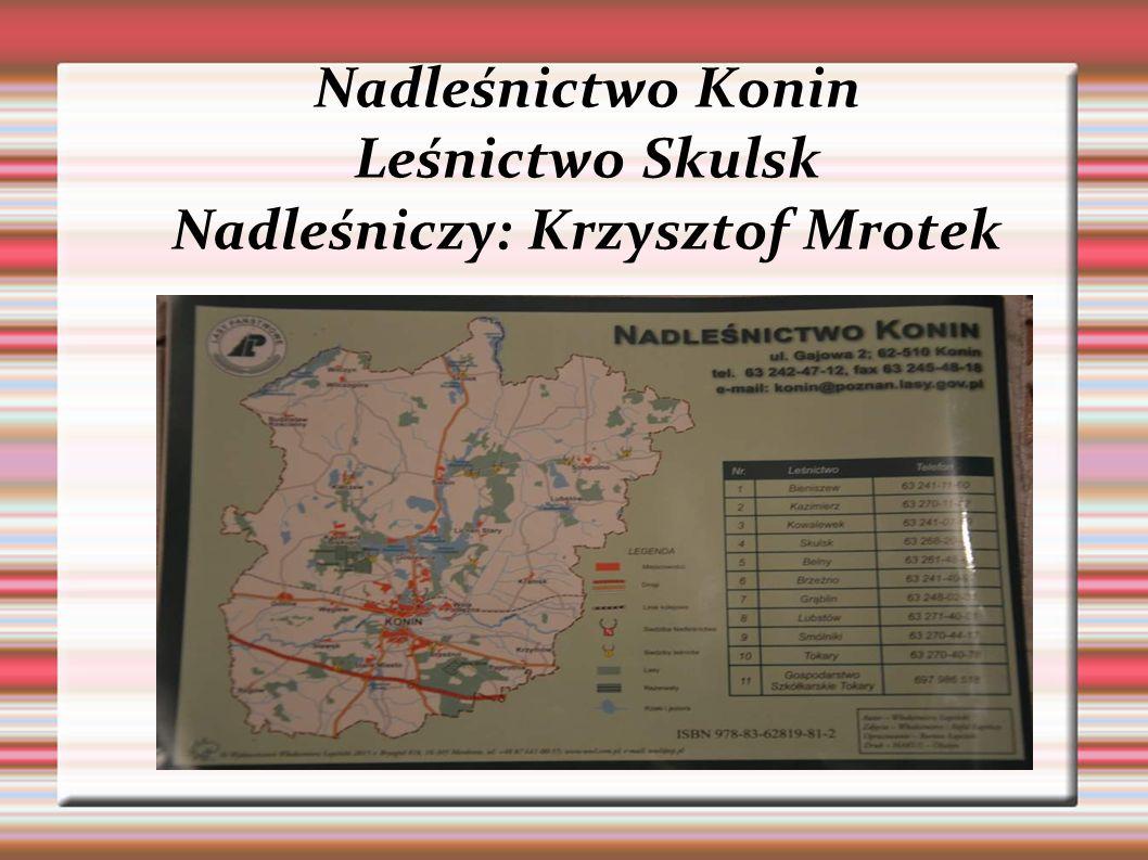 Nadleśnictwo Konin Leśnictwo Skulsk Nadleśniczy: Krzysztof Mrotek
