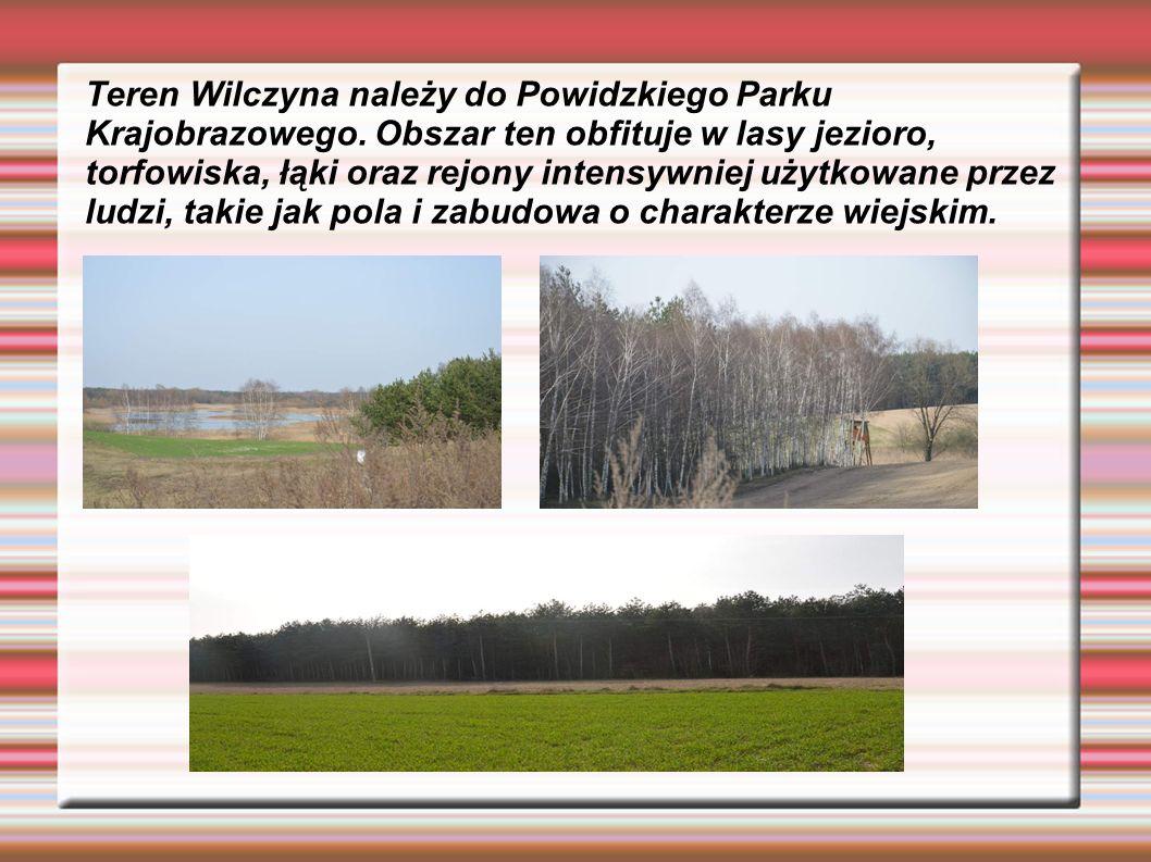 Teren Wilczyna należy do Powidzkiego Parku Krajobrazowego.