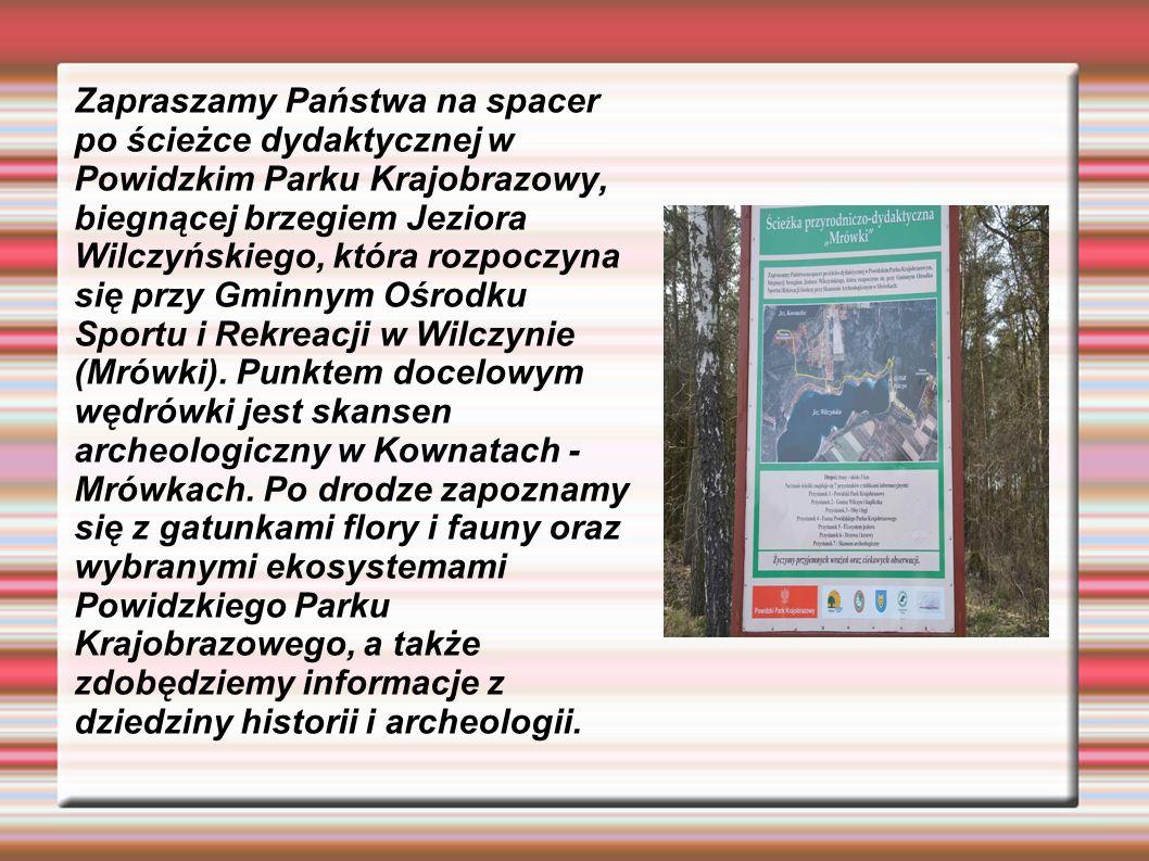 Zapraszamy Państwa na spacer po ścieżce dydaktycznej w Powidzkim Parku Krajobrazowy, biegnącej brzegiem Jeziora Wilczyńskiego, która rozpoczyna się przy Gminnym Ośrodku Sportu i Rekreacji w Wilczynie (Mrówki).