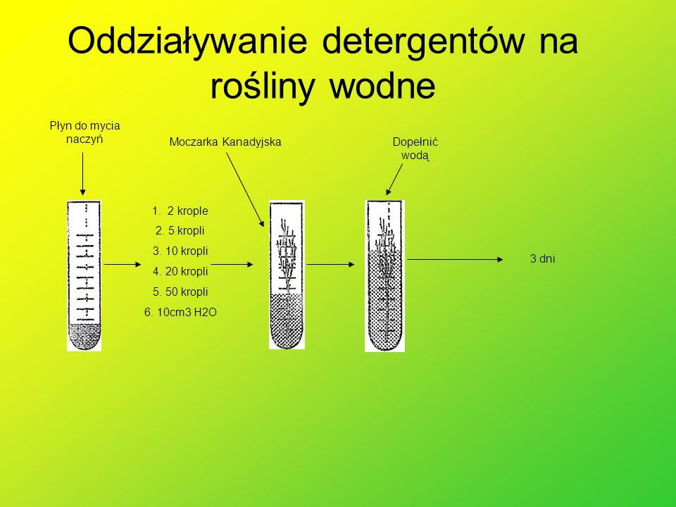 Oddziaływanie detergentów na rośliny wodne Płyn do mycia naczyń 1. 2 krople 2. 5 kropli 3. 10 kropli 4. 20 kropli 5. 50 kropli 6. 10cm3 H2O Moczarka K