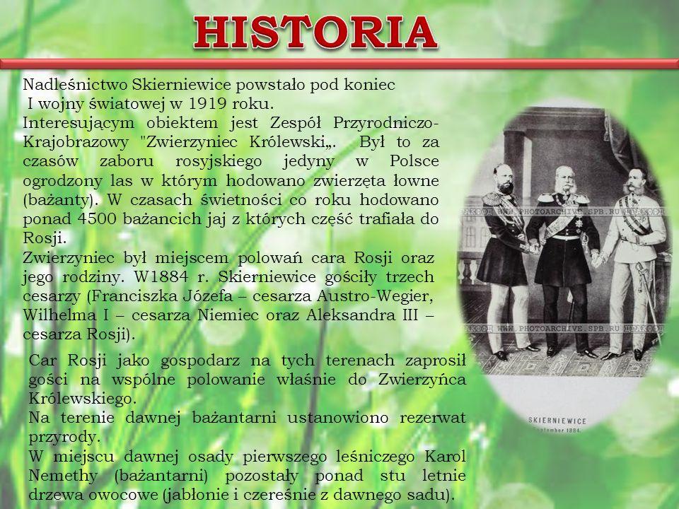 Nadleśnictwo Skierniewice powstało pod koniec I wojny światowej w 1919 roku.