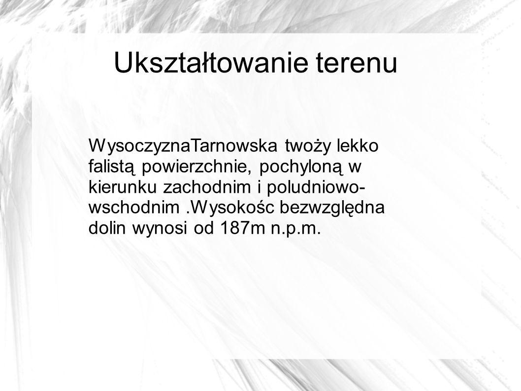 Ukształtowanie terenu WysoczyznaTarnowska twoży lekko falistą powierzchnie, pochyloną w kierunku zachodnim i poludniowo- wschodnim.Wysokośc bezwzględna dolin wynosi od 187m n.p.m.