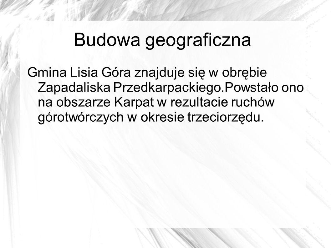 Budowa geograficzna Gmina Lisia Góra znajduje się w obrębie Zapadaliska Przedkarpackiego.Powstało ono na obszarze Karpat w rezultacie ruchów górotwórczych w okresie trzeciorzędu.