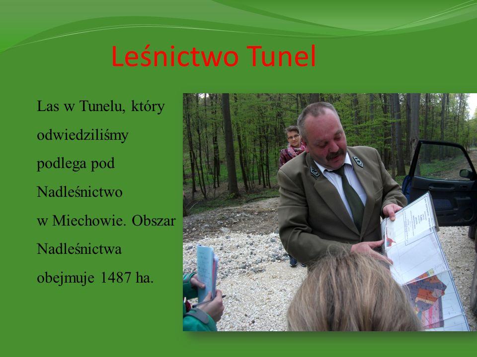 Leśnictwo Tunel Las w Tunelu, który odwiedziliśmy podlega pod Nadleśnictwo w Miechowie. Obszar Nadleśnictwa obejmuje 1487 ha.