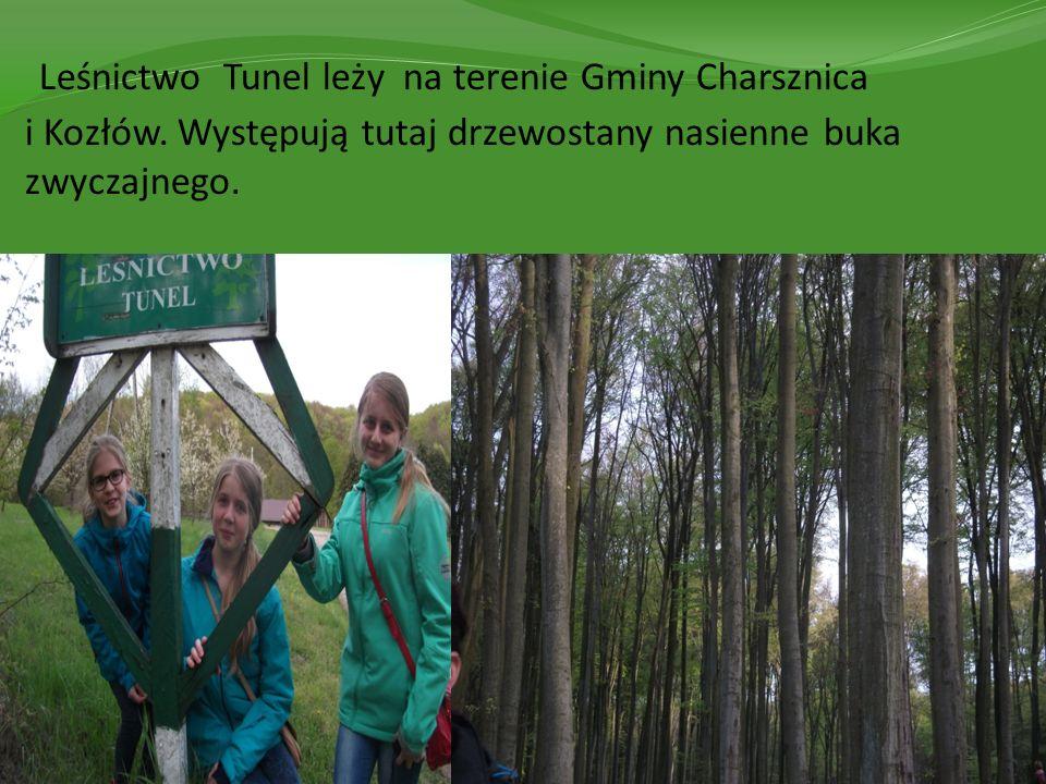 Leśnictwo Tunel leży na terenie Gminy Charsznica i Kozłów. Występują tutaj drzewostany nasienne buka zwyczajnego.