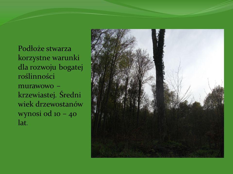 Podłoże stwarza korzystne warunki dla rozwoju bogatej roślinności murawowo – krzewiastej. Średni wiek drzewostanów wynosi od 10 – 40 lat.