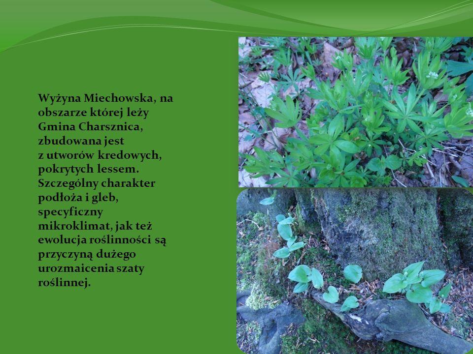 Wyżyna Miechowska, na obszarze której leży Gmina Charsznica, zbudowana jest z utworów kredowych, pokrytych lessem. Szczególny charakter podłoża i gleb