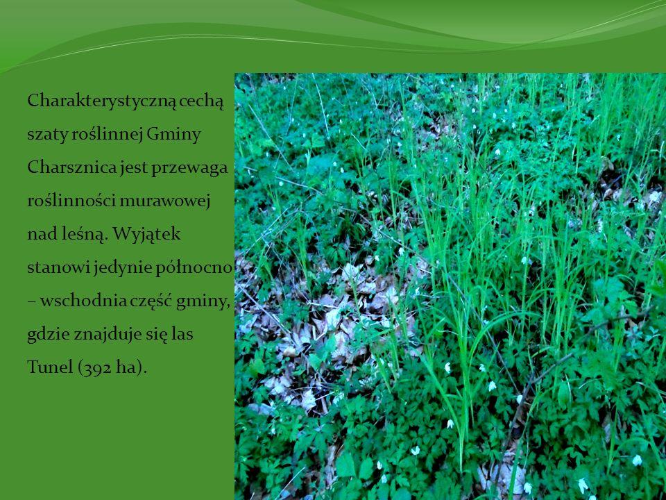 Charakterystyczną cechą szaty roślinnej Gminy Charsznica jest przewaga roślinności murawowej nad leśną. Wyjątek stanowi jedynie północno – wschodnia c