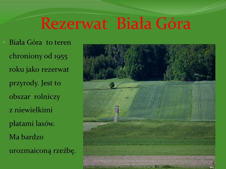 Rezerwat Biała Góra Biała Góra to teren chroniony od 1955 roku jako rezerwat przyrody. Jest to obszar rolniczy z niewielkimi płatami lasów. Ma bardzo