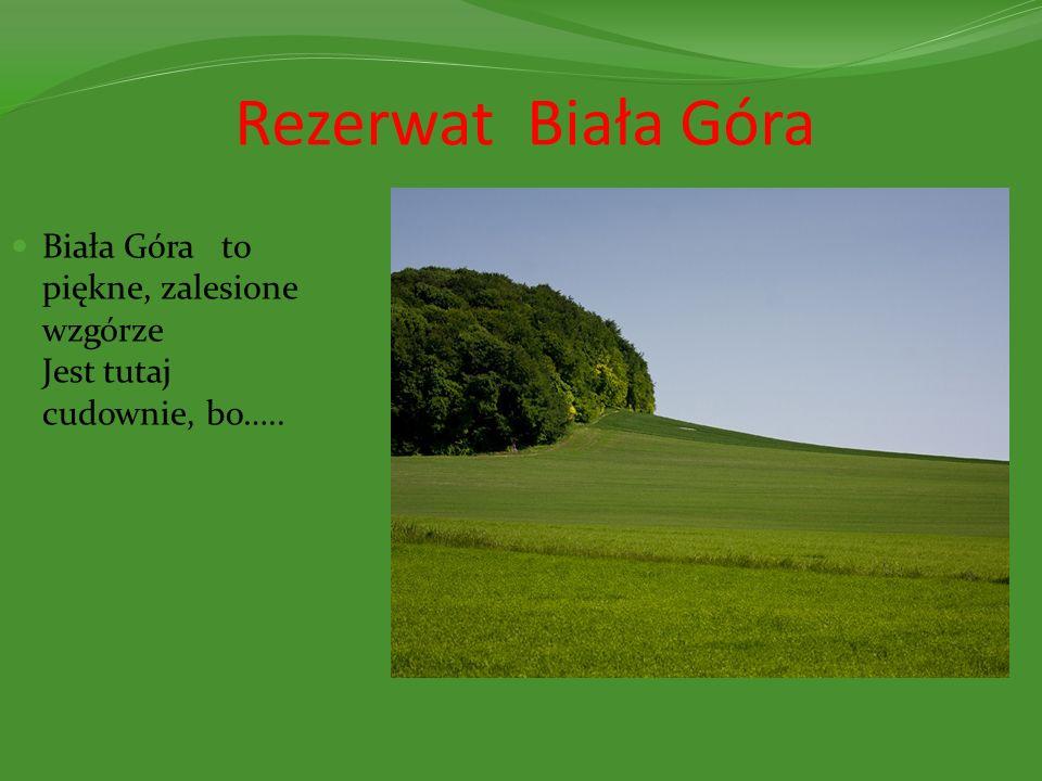 Rezerwat Biała Góra Biała Góra to piękne, zalesione wzgórze Jest tutaj cudownie, bo…..