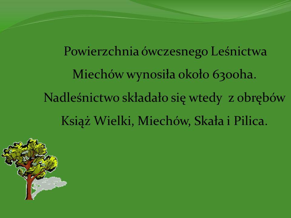 Powierzchnia ówczesnego Leśnictwa Miechów wynosiła około 6300ha. Nadleśnictwo składało się wtedy z obrębów Książ Wielki, Miechów, Skała i Pilica.