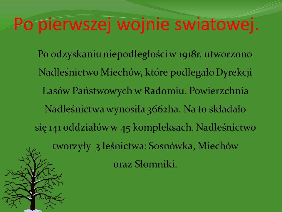 Prezentację, pod kierunkiem Pani Marii Mirskiej, przygotowały uczennice SP im.