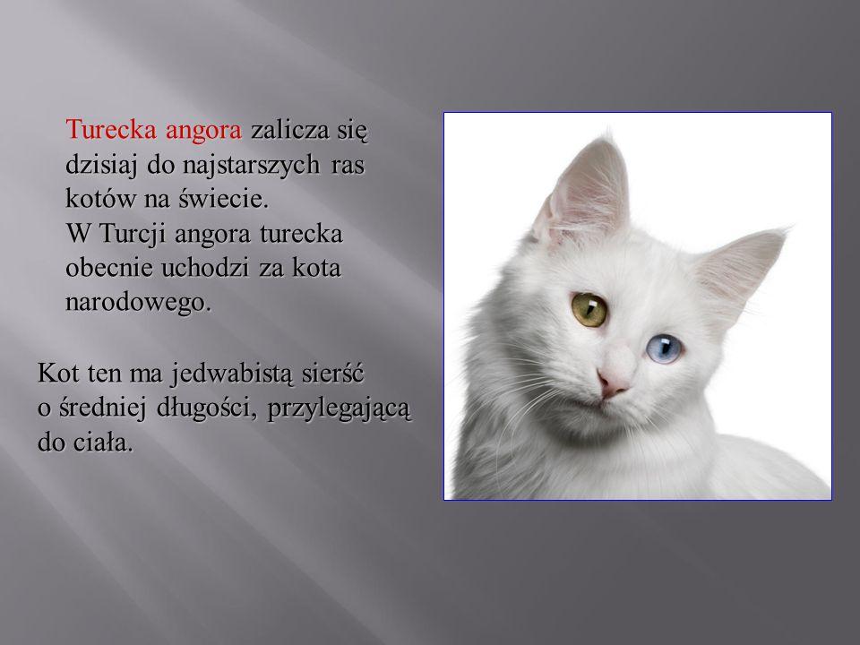 Turecka angora zalicza się dzisiaj do najstarszych ras kotów na świecie. W Turcji angora turecka obecnie uchodzi za kota narodowego. Kot ten ma jedwab