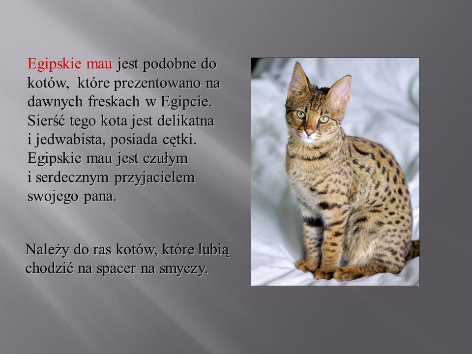 Egipskie mau jest podobne do kotów, które prezentowano na dawnych freskach w Egipcie. Sierść tego kota jest delikatna i jedwabista, posiada cętki. Egi
