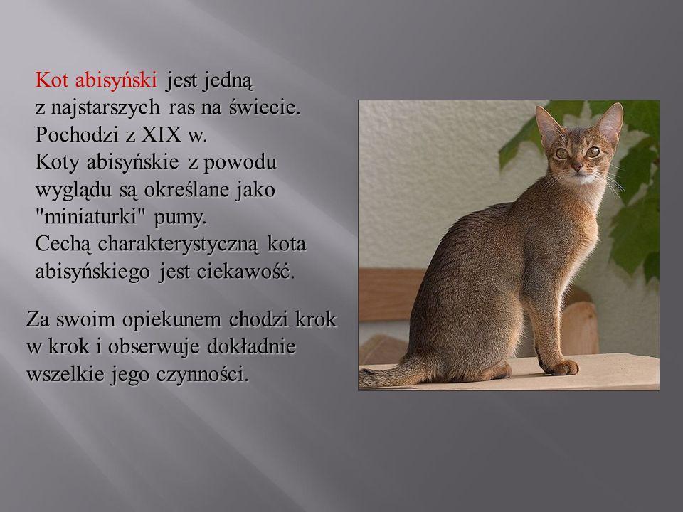 Kot abisyński jest jedną z najstarszych ras na świecie. Pochodzi z XIX w. Koty abisyńskie z powodu wyglądu są określane jako