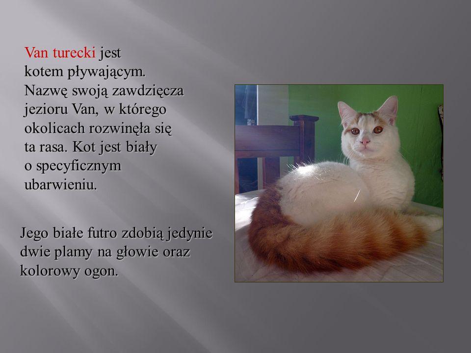 Van turecki jest kotem pływającym. Nazwę swoją zawdzięcza jezioru Van, w którego okolicach rozwinęła się ta rasa. Kot jest biały o specyficznym ubarwi